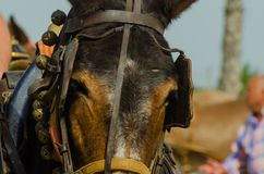 ALMAYATE, SPAIN - APRIL 22, 2018 Traditional Andalusian contest based on the presentation of the ability to drive horse with cart. ALMAYATE, SPAIN - APRIL 22 Royalty Free Stock Photos