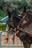 ALMAYATE, SPAIN - APRIL 22, 2018 Traditional Andalusian contest based on the presentation of the ability to drive horse with cart. ALMAYATE, SPAIN - APRIL 22 Royalty Free Stock Photo