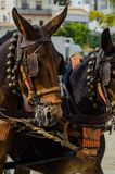 ALMAYATE, SPAIN - APRIL 22, 2018 Traditional Andalusian contest based on the presentation of the ability to drive horse with cart. ALMAYATE, SPAIN - APRIL 22 Stock Photos