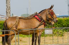 ALMAYATE, SPAIN - APRIL 22, 2018 Traditional Andalusian contest based on the presentation of the ability to drive horse with cart. ALMAYATE, SPAIN - APRIL 22 Stock Image