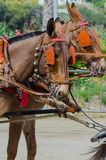 ALMAYATE, SPAIN - APRIL 22, 2018 Traditional Andalusian contest based on the presentation of the ability to drive horse with cart. ALMAYATE, SPAIN - APRIL 22 Stock Images