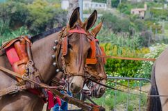 ALMAYATE, SPAIN - APRIL 22, 2018 Traditional Andalusian contest based on the presentation of the ability to drive horse with cart. ALMAYATE, SPAIN - APRIL 22 Stock Photography