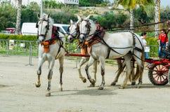 ALMAYATE, SPANIEN - 22. April 2018 traditioneller andalusischer Wettbewerb stockfotos