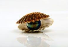 Almeja con por ella Imagen de archivo libre de regalías