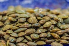 Almeja de resaca (undulatus de Paratapes) para la venta en el mercado de los mariscos, imágenes de archivo libres de regalías