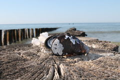 Almeja del mar Fotos de archivo