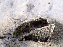 Almeja en la playa arenosa en el lago fotografía de archivo
