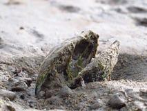 Almeja en la playa arenosa en el lago imagen de archivo libre de regalías