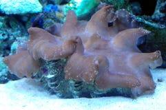 Almeja encontrada bajo el mar Imagen de archivo libre de regalías