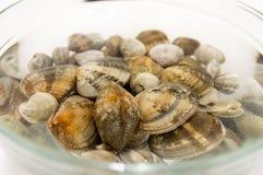 Almejas crudas frescas en el agua con la sal fotos de archivo