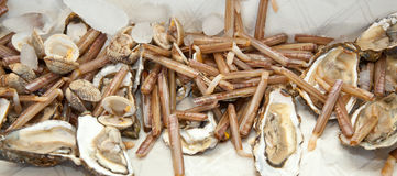 Almejas de maquinilla de afeitar con las ostras en el hielo Imagen de archivo libre de regalías