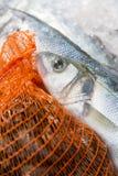 Almejas en los pescados netos y frescos en el hielo Fotografía de archivo