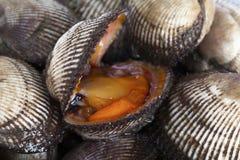 Almejas frescas Foto de archivo