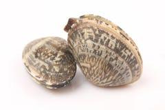 Almejas frescas Fotos de archivo