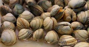 Almejas frescas en el mercado español de los mariscos Foto de archivo