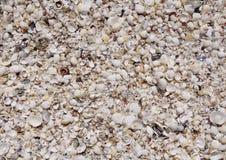 Almejas y caracoles blancos de la cáscara en la playa Fotos de archivo