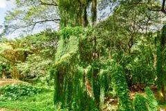 Almendares-Park - Havana, Kuba lizenzfreie stockfotos