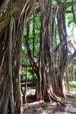 Almendares-Park - Havana, Kuba lizenzfreies stockfoto