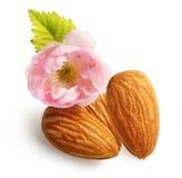 Almendras nuts con la flor aislada Fotos de archivo libres de regalías