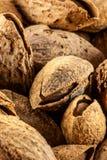 Almendras tostadas Foto de archivo libre de regalías