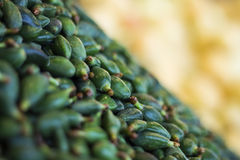 Almendras verdes frescas Imagen de archivo libre de regalías