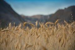 Almería Desert Stock Photography