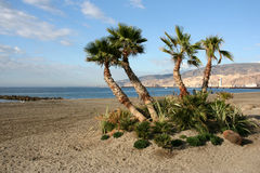 Almeria. Sandy beach with palm trees in Almeria, Andalusia, Spain. Seaport in the background. November Spanish landscape Stock Photos