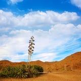 Almeria Cabo de Gata agawa kwitnie w Hiszpania Zdjęcia Royalty Free