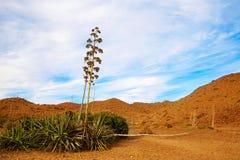 Almeria Cabo de Gata agawa kwitnie w Hiszpania Obraz Royalty Free