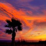 Almeria Cabo de Gata sunset pam trees Retamar Stock Photo