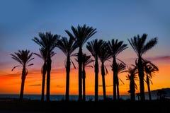 Almeria Cabo de Gata sunset pam trees Retamar Stock Photography