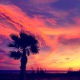 Almeria Cabo de Gata sunset pam trees Retamar Royalty Free Stock Photography