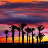 Almeria Cabo de Gata sunset pam trees Retamar Royalty Free Stock Images