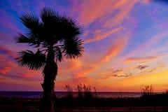 Almeria Cabo de Gata sunset pam trees Retamar Royalty Free Stock Photo