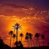 Almeria in Cabo palm trees in Rodalquilar Spain Royalty Free Stock Photo
