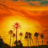 Almeria in Cabo palm trees in Rodalquilar Spain Royalty Free Stock Photography