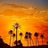 Almeria in Cabo palm trees in Rodalquilar Spain Stock Image