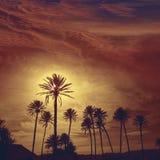 Almeria in Cabo palm trees in Rodalquilar Spain Stock Photos