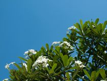 Almeria che spedice in franchigia gli alberi Fotografia Stock Libera da Diritti