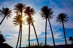 Almeria nelle palme di Cabo in Rodalquilar Spagna Fotografia Stock Libera da Diritti