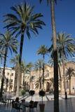 Almeria, Spain. Almeria city, Spain. Palm trees at Plaza de la Catedral Royalty Free Stock Image