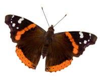Almirante vermelho borboleta Imagem de Stock