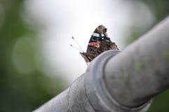 Almirante vermelho Butterfly fotografia de stock royalty free