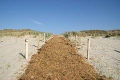 Almofada através das dunas Fotografia de Stock Royalty Free