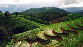 Almofada da paisagem Imagem de Stock