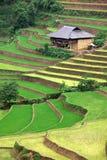 Almofada de arroz Imagens de Stock Royalty Free