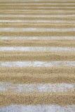 Almofada de arroz Fotografia de Stock Royalty Free