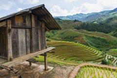 Almofada de arroz em MU Cang Chai Foto de Stock