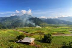 Almofada de arroz em MU Cang Chai Fotos de Stock Royalty Free