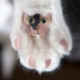 Almofada peludo engraçada do gato com face Fotos de Stock